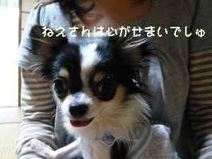 blog2008053101.jpg