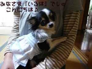 blog2008053103.jpg