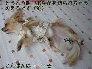 blog2008060201.jpg