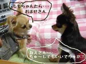blog2008060203.jpg