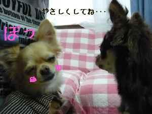 blog2008060204.jpg