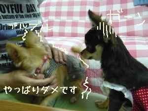 blog2008060206.jpg