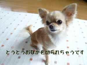 blog2008060301.jpg