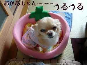 blog2008060403.jpg