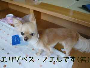 blog2008060405.jpg