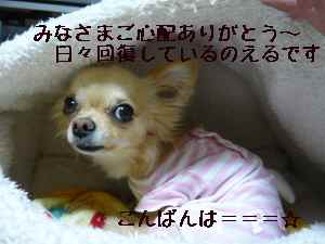blog2008060502.jpg