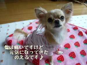 blog2008060602.jpg