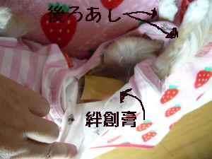 blog2008060603.jpg