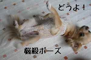 blog2008060703.jpg