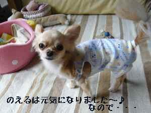 blog2008060901.jpg