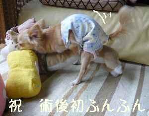 blog2008060902.jpg
