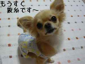 blog2008061102.jpg