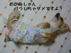 blog2008061103.jpg