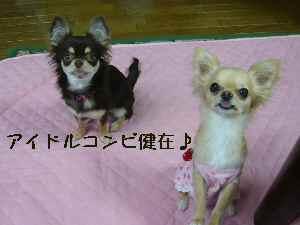 blog20080619.jpg