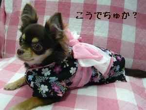 blog2008061902.jpg
