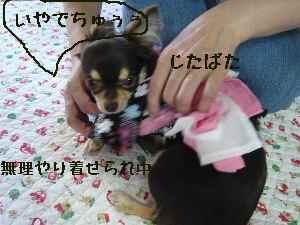 blog2008061903.jpg