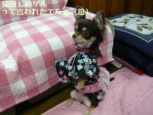 blog2008061904.jpg