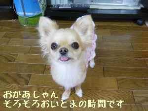 blog2008061905.jpg