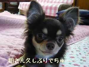 blog2008061906.jpg