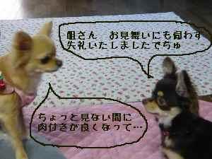blog2008061907.jpg