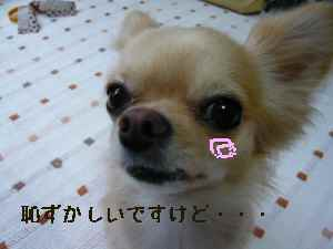 blog2008062301.jpg