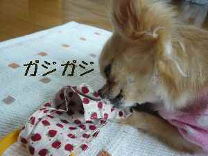 blog2008062403.jpg