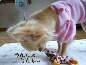 blog2008062404.jpg