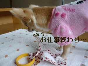 blog2008062406.jpg
