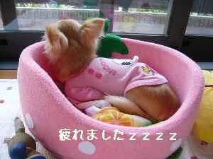 blog2008062408.jpg