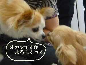 blog2008062506.jpg
