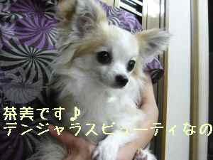 blog2008062507.jpg