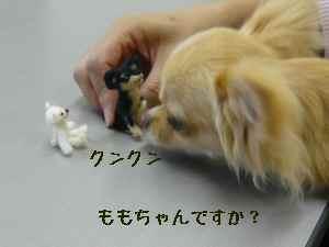 blog2008062508.jpg