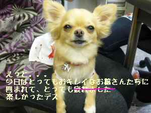 blog2008062509.jpg
