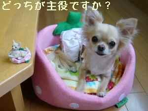 blog2008070202.jpg