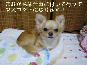 blog2008070401.jpg
