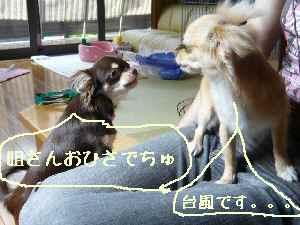 blog2008070702.jpg