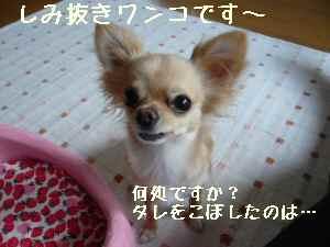blog2008071701.jpg