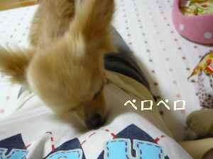 blog2008071702.jpg