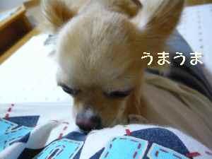 blog2008071703.jpg