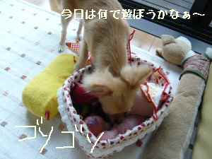 blog2008071802.jpg