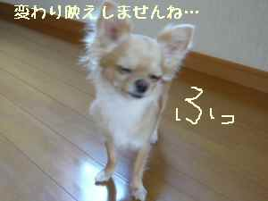blog2008072303.jpg