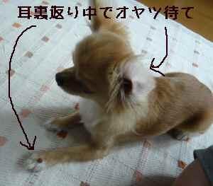 blog200807302.jpg