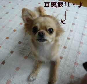 blog200807303.jpg