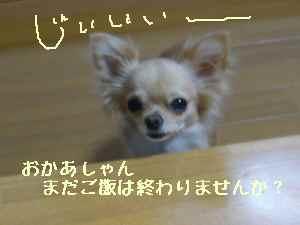 blog20080810.jpg