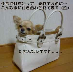blog2008081201.jpg
