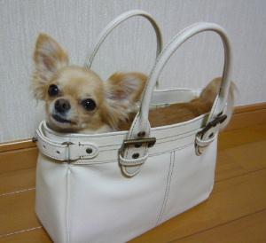 blog2008081202.jpg