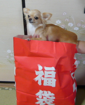 blog2008081301.jpg