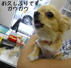 blog2008081403.jpg
