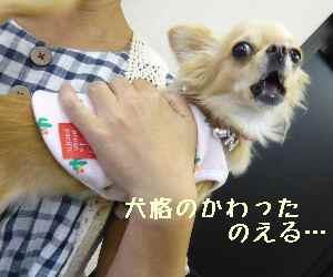 blog2008081404.jpg