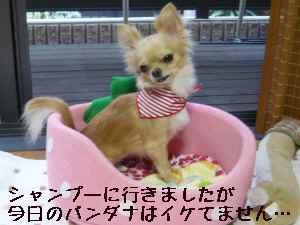 blog20080821.jpg